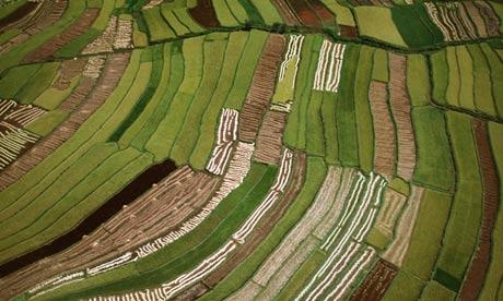 Rice Paddies in Madagascar