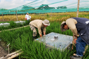 "At the International Center for Tropical Agriculture in Colombia, researchers measure the greenhouse gas emissions of rice production. One of the goals of so-called ""climate-smart agriculture"" is to reduce greenhouse gas emissions from practices such as flooding rice fields, which increases the release of methane. The climate-smart agricultural movement also aims to strengthen global food security, improve resilience to climate change, and help 500 million small farmers adapt to more stressful growing conditions. (Photo credit: Neil Palmer/CIAT)"