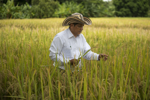 "Cristo Perez, an agronomist at Fedearroz — the Colombian rice growers association — selects rice plants at La Victoria research center in the Cordoba region of northern Colombia. Fedearroz is working with a variety of Colombian and international organizations to develop so-called ""climate-smart"" agricultural techniques that protect farmers from the effects of global warming and improve crop yields, while also limiting greenhouse gas emissions. (Photo credit: EITAN ABRAMOVICH/AFP/Getty Images)"